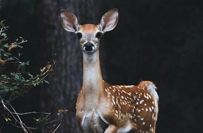 Jagdhaftpflicht: unumgänglich für Ihre Sicherheit und den Schutz Ihres Jagdglücks.