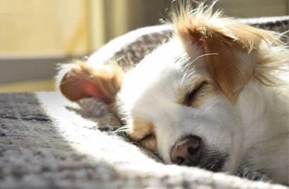 Tierkrankenversicherung: Sichern Sie Ihrem Haustier die beste medizinische Versorgung
